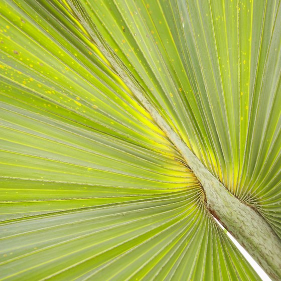 A little known use for saw palmetto is to promote relaxation.