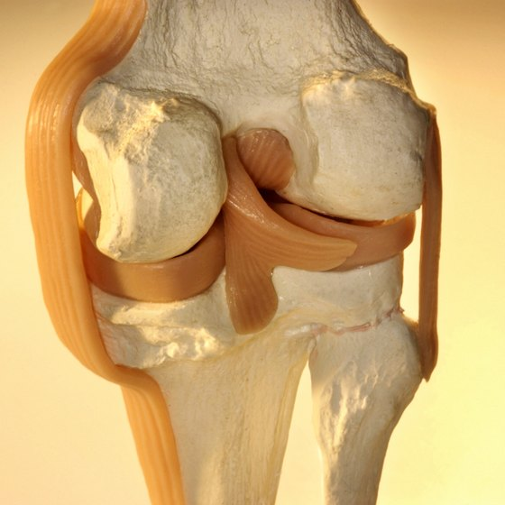 Ligaments support and stabilize joints.