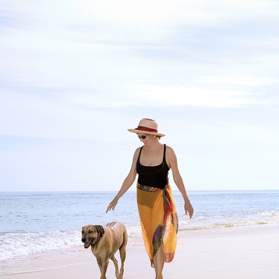 South Florida beaches welcome dogs in designated areas.