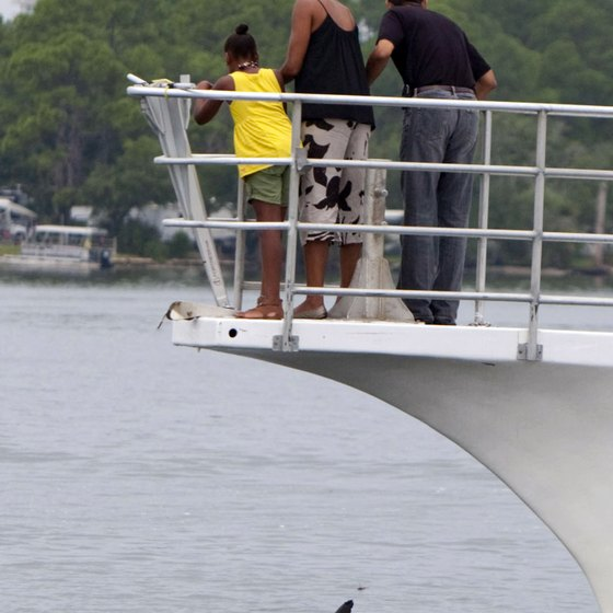 In 2010, President Barack Obama and his family found out firsthand that St. Andrews Bay is a haven for dolphins during a tour of the bay.