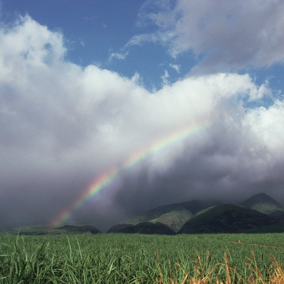 A rainbow hangs over a field of sugar cane, one of Maui's biggest crops.