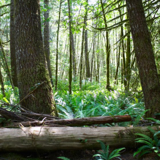 Dense vegetation is common in tropical climates.