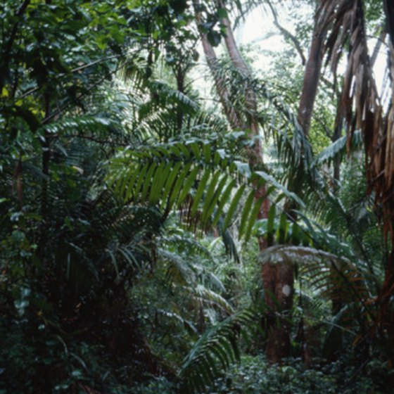 Tropical rainforests are located mostly near the equator.