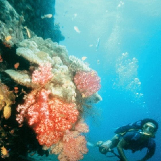 Coral reefs are home to many of the ocean's sea creatures in the tropics.