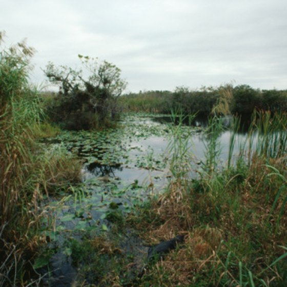 No-see-ums live in wetlands, like mosquitoes, but do not transmit the West Nile Virus.