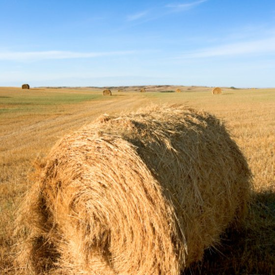 Hay is a suitable environment for a viariety of insects.