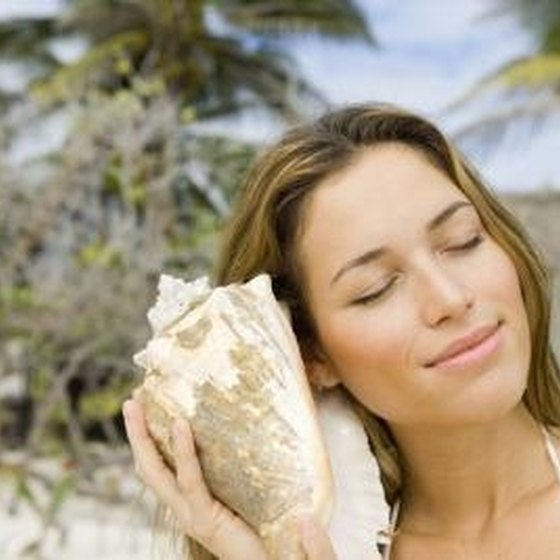 Where To Buy Seashells In Myrtle Beach