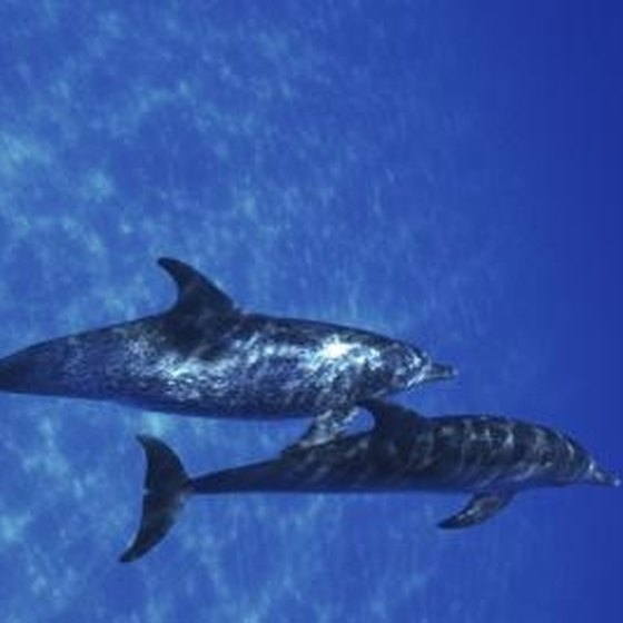 Swimming with dolphins can be a magical experience.