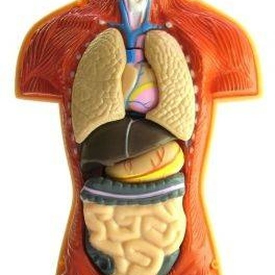 What Is the Function of the Liver? | Healthy Living