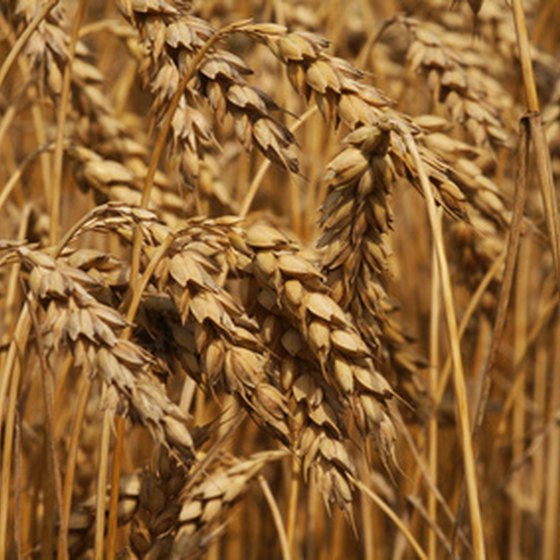 Unrefined wheat products use all parts of the wheat, keeping its full nutritional value.