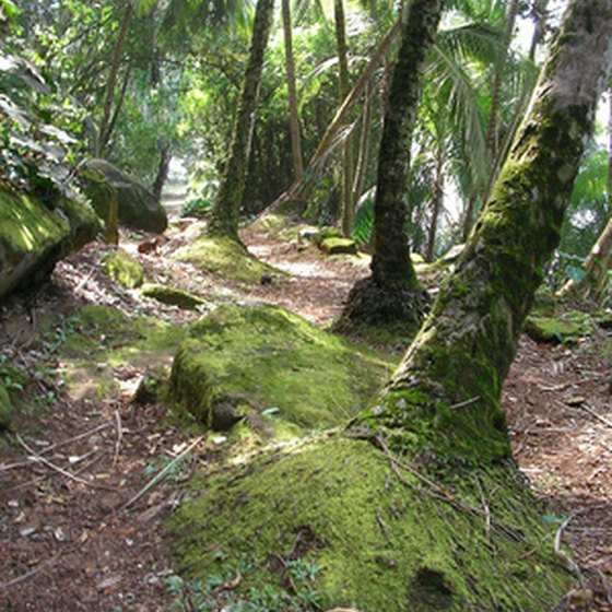 The rainforest is responsible for filtering a large part of the carbon dioxide in our air.