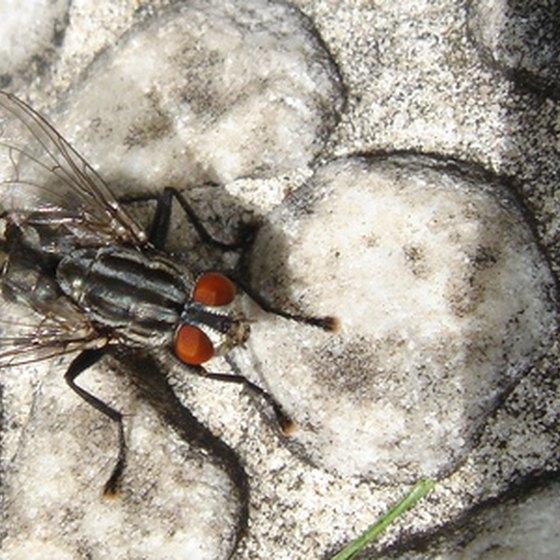 Maggots are baby flies.
