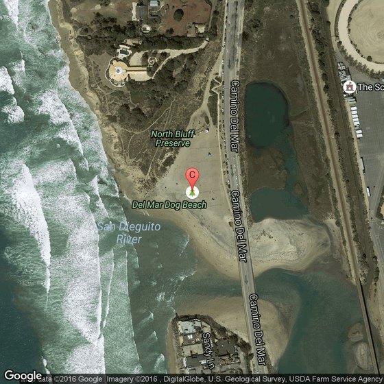 Pet-Friendly Hotels Near Dog Beach in Ocean Beach