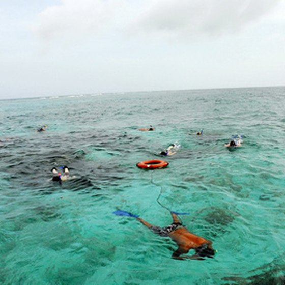 The best snorkeling is usually in shallow water.