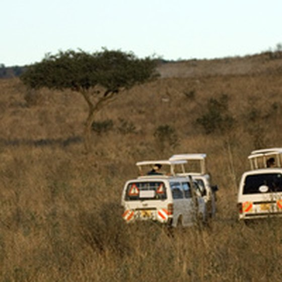 Tour groups out on safari