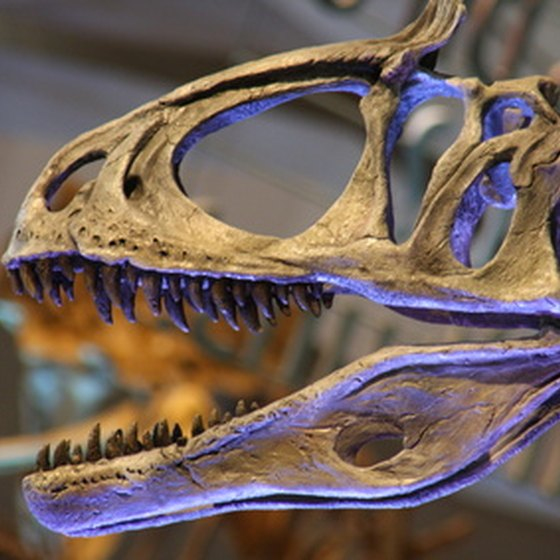 Dinosaur fossils are showcased at Agate Fossil Beds National Monument.