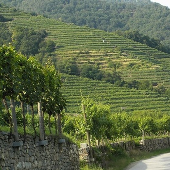 Tuscany is one of Italy's many wine-producing regions.