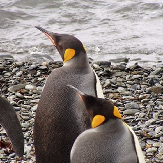 Penguins are commonly seen during Antarctica tours.