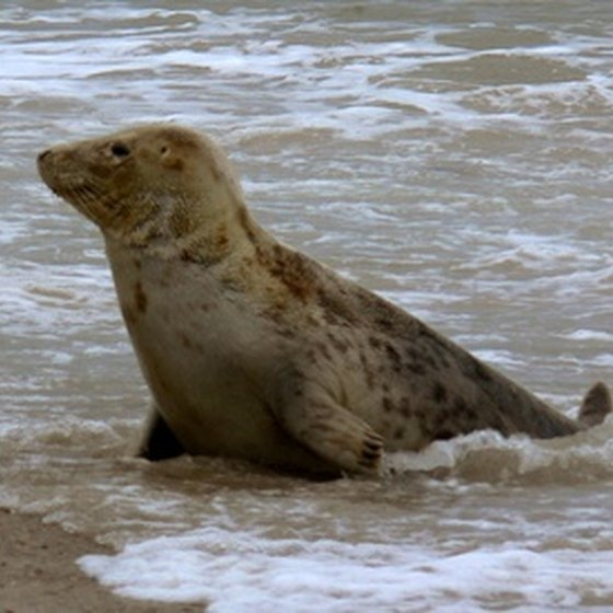Seals are just one example of San Francisco's local sea life.