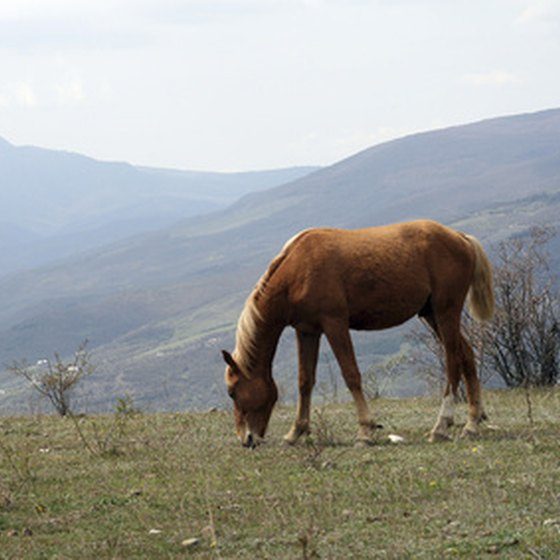 There are singles tours with horseback riding in mountain meadows.