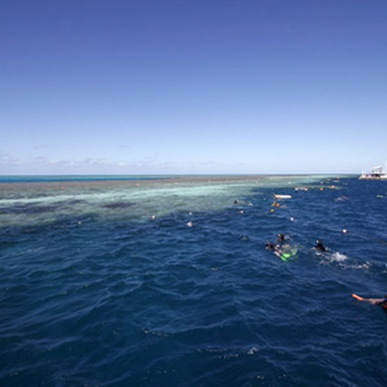 Swimming near the Great Barrier Reef makes you forget all about the cold and snow back home.