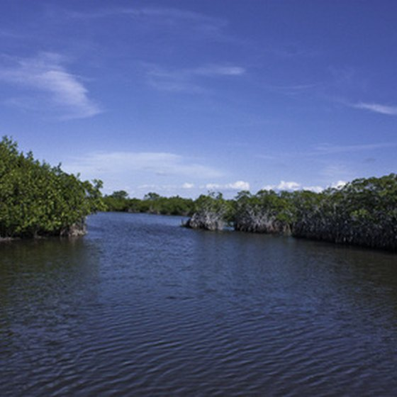 Mangroves among the Ten Thousand Islands of Everglades National Park.