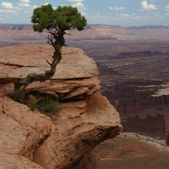 The Grand Canyon is 277 miles long and up to 18 miles wide in places