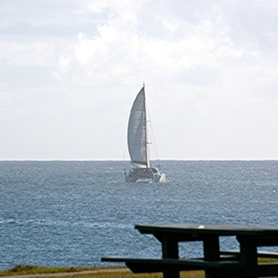 A catamaran with its sail up