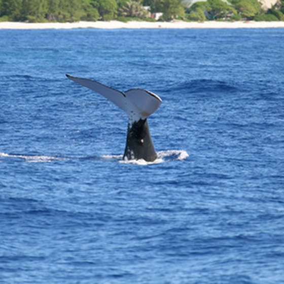 Spring and summer are the best times for whale watching in Massachusetts.