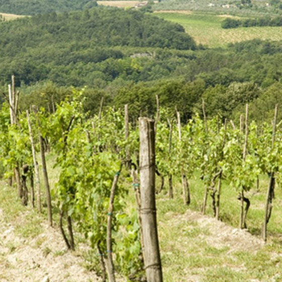Italy has more than 19 wine regions.