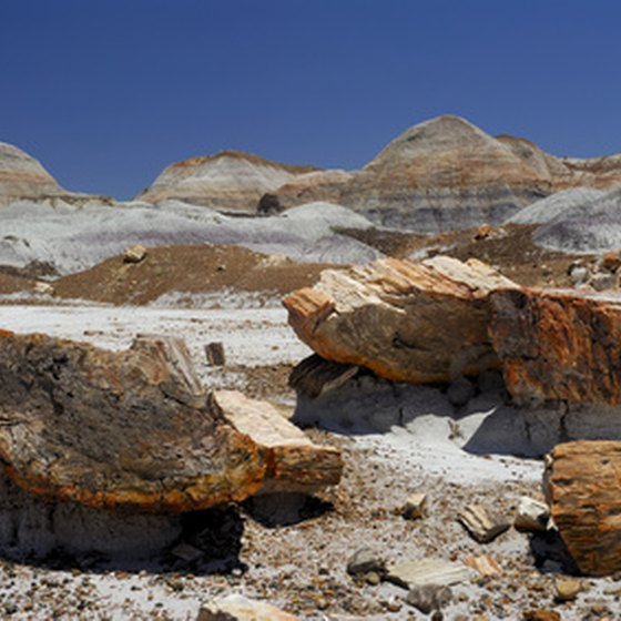 Holbrook is 28 miles from the Petrified Forest National Park.