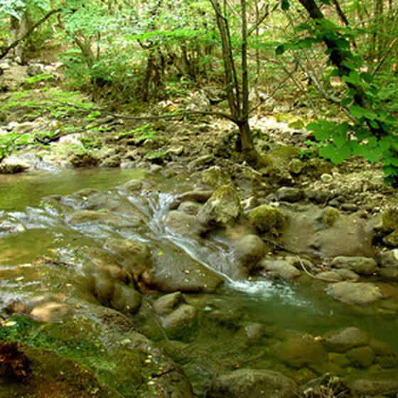 The state parks in northeast Georgia feature many streams, forests and other scenic beauty.