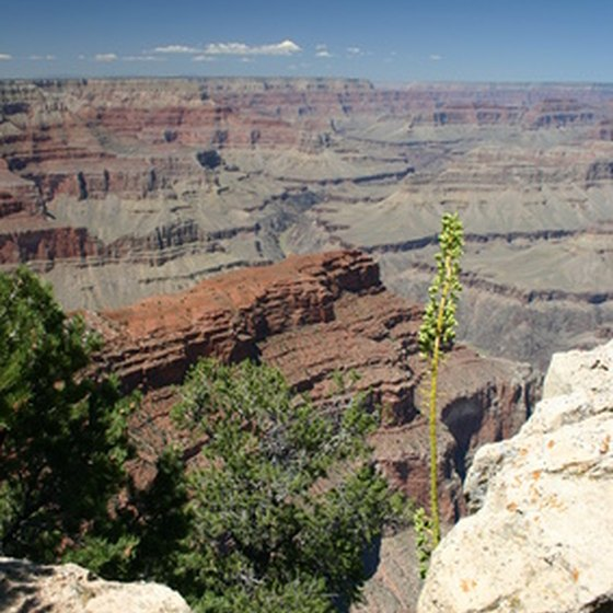 The North Rim of the Grand Canyon is more rugged and less visited than the South Rim.