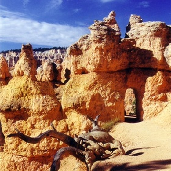 Bryce Canyon provides outdoor activities for pets and owners to enjoy.