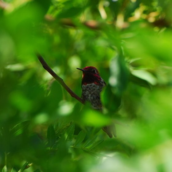 Costa Rica is home to more than 50 hummingbird species.
