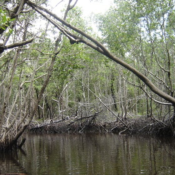 Swampy freshwater lakes create good fishing and exploring opportunities in central Florida.