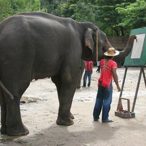 Chiang Mai is as noted for its elephants as for its adventure sports.