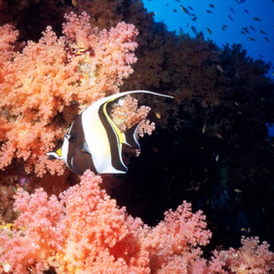 Novice divers can experience the protected reefs around Cozumel.