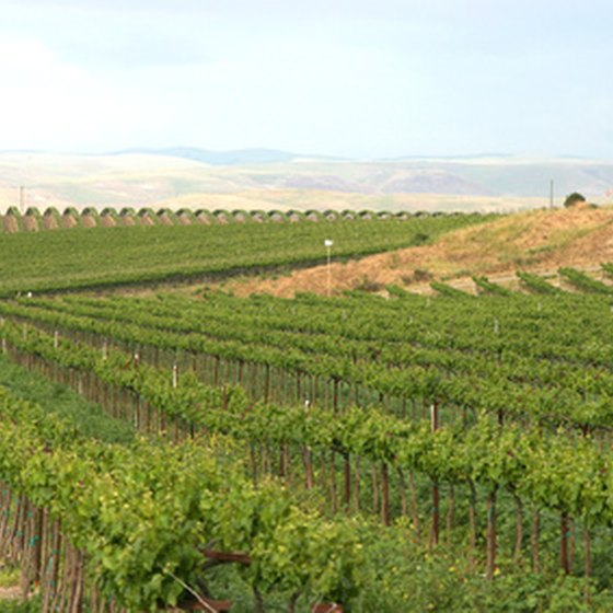 Recreation lakes can be found in California's wine country.