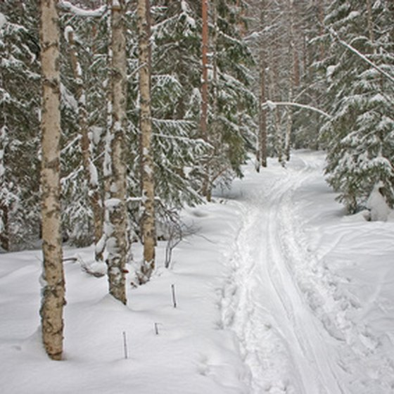 Acadia's carriage roads wind through snow-covered pines and birch forests.
