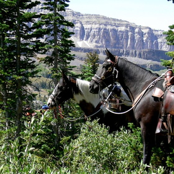 Give the children a chance to be cowboys on a family vacation in Wyoming.