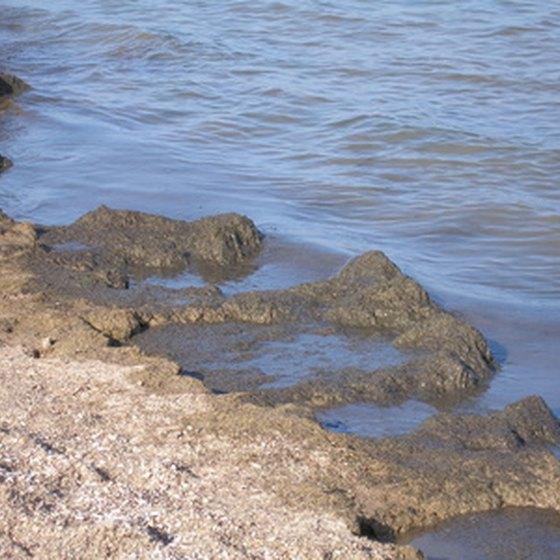 Galveston Texas Is Home To Beaches