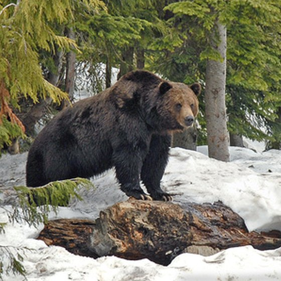 Animals in Denali National Park