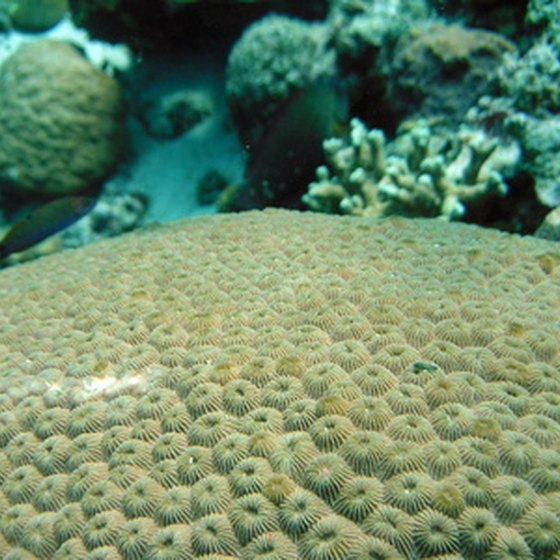Coral Reefs In Mexico