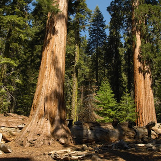 Hikers enjoy intimate contact with Sequoia National Forest.