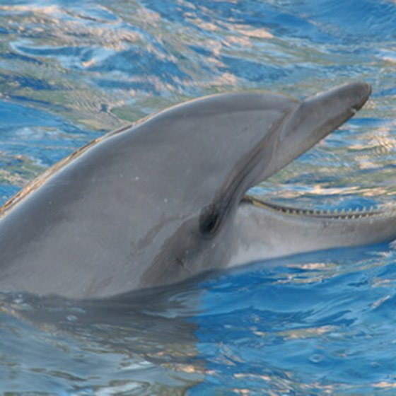 Interacting with playful dolphins face to face is a highlight of a Cancun vacation for many.