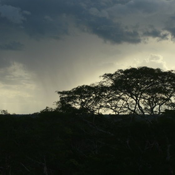 Ten percent of the Earth's tree species are found in the Ecuadorian Amazon region.