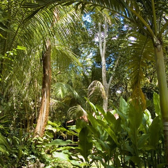 Belize features undisturbed rain forests.