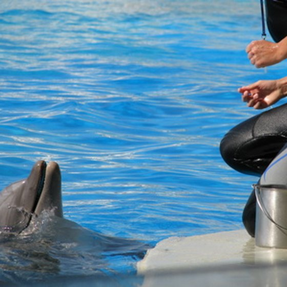 Zoomarine's program allows dolphin swims under controled conditions.