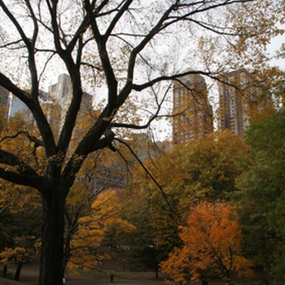 Central Park is one of several natural attractions in New York City.